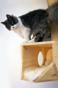 wooden catissa